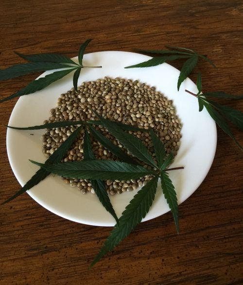 cannabis seeds hemp seeds food