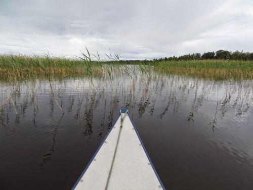 canoeing,bug,lake,reed,landscape,water