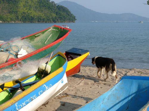kanojos,papludimys,sausas baras,ubatuba,San Paulas,Brazilija,valtis,žvejyba,mar,kanoją,vanduo,šuo,medinė valtis,kraštovaizdis,scenarijus,irklavimo valtis