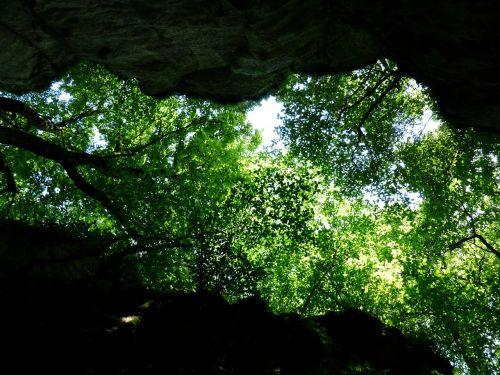 canopy trees green