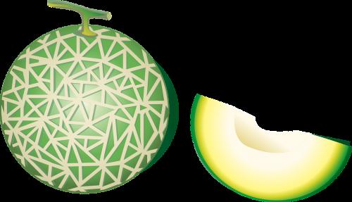 cantaloupe hami melon fruit