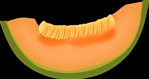 cantaloupe melon fruit
