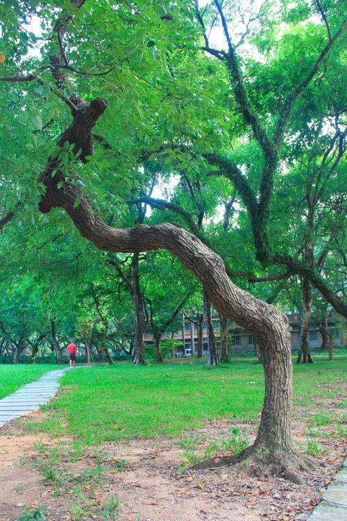 canton sun yat-sen university green