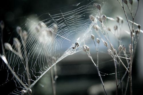 canvas spider animals