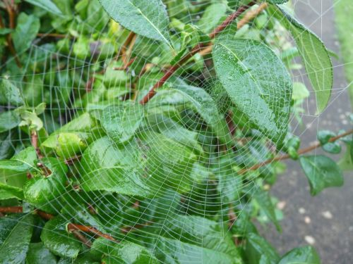 canvas spider leaf