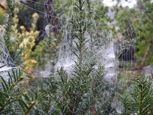 canvas spider garden