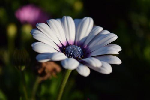viršukalnės krepšys,žydėti,gėlė,balta,Uždaryti,gražus,žiedas,žydėti,vasara,atvirukas,sveikinimai