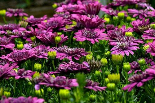 cape basket  flowers  colorful