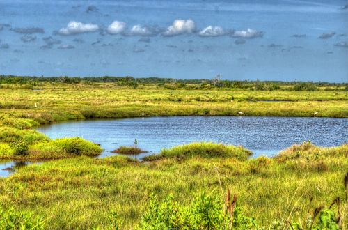 cape canaveral swamp lake