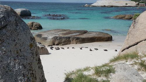 cape town boulders beach africa