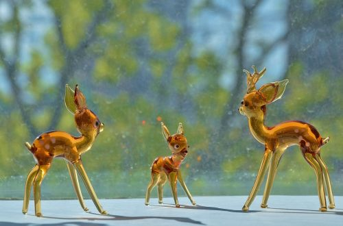 capreolus young animals cute