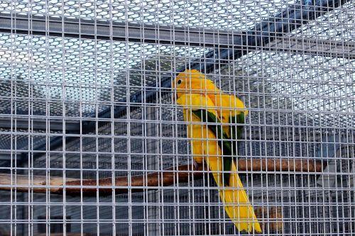 captivity cage bird cage