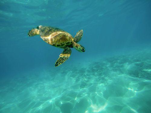 carapace marine turtle ocean