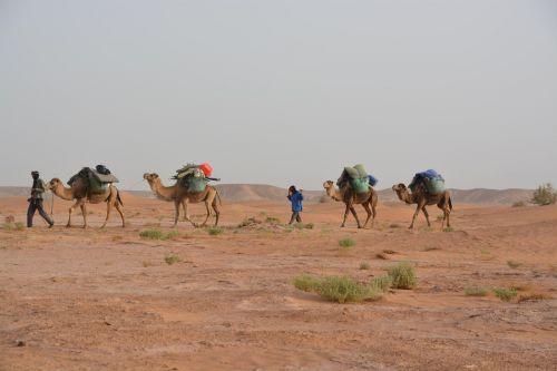 caravan travel desert