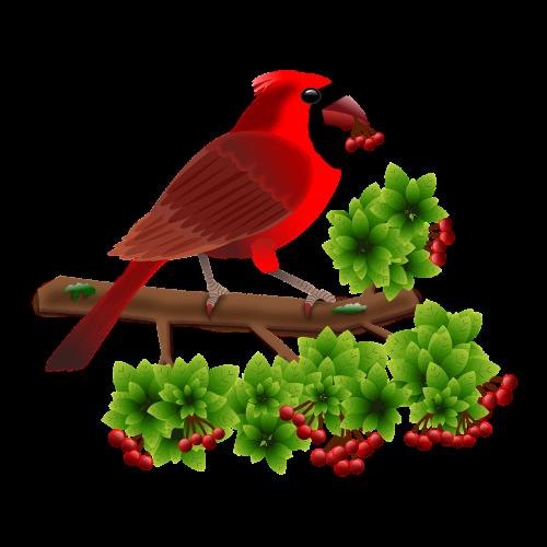 cardinal birds animals