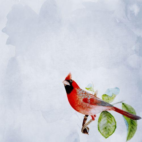 Cardinal Bird Background