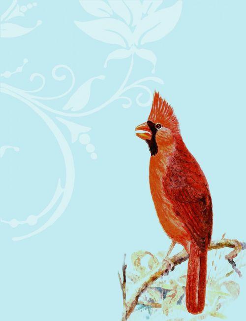 Cardinal Bird On Branch