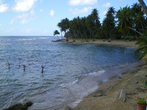 caribbean sea puerto rico beach