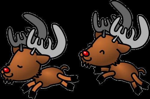 caribou reindeer deer