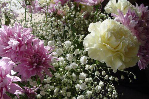 carnation flowers million stars