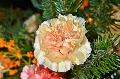 carnation carnations arrangement petals