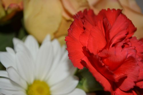 Carnation Daisy Flower Party Art