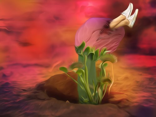 carnivore  venus flytrap  flower