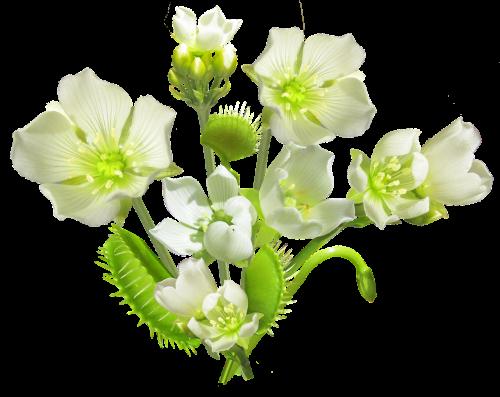 carnivorous plant flowers