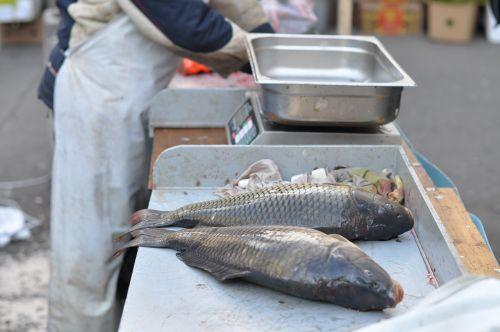 carp harvesting scales