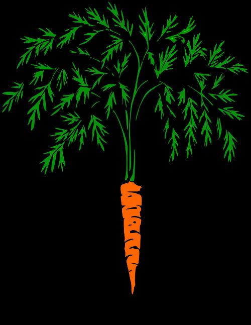 carrot orange carrot vegetables