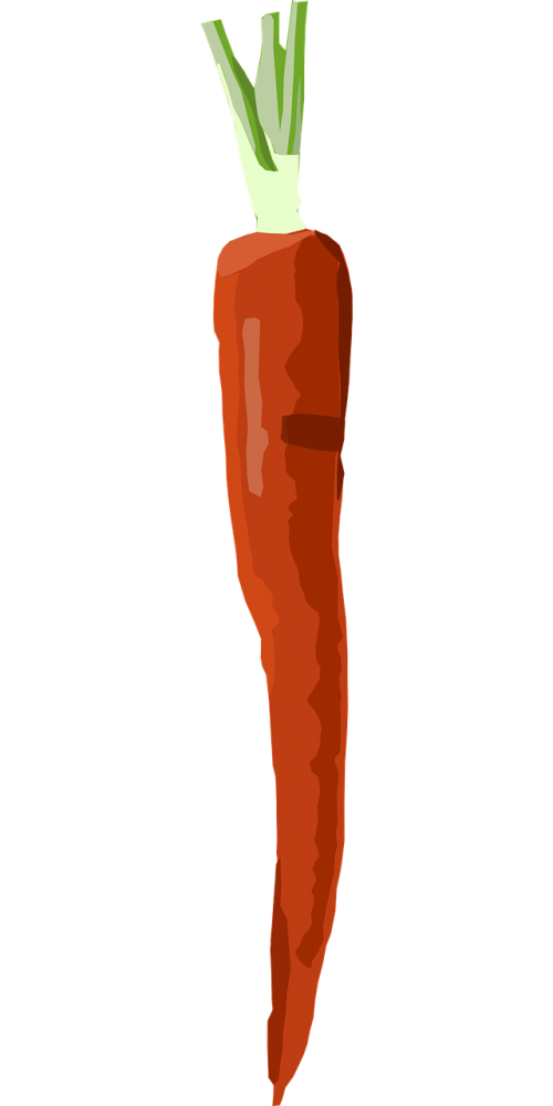 carrot vegetable food