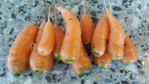 carrot carrots tuber