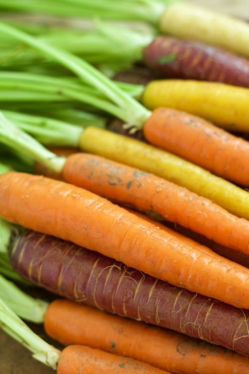 carrots orange vegetable