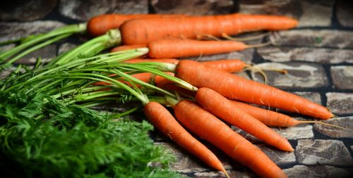 carrots vegetables harvest