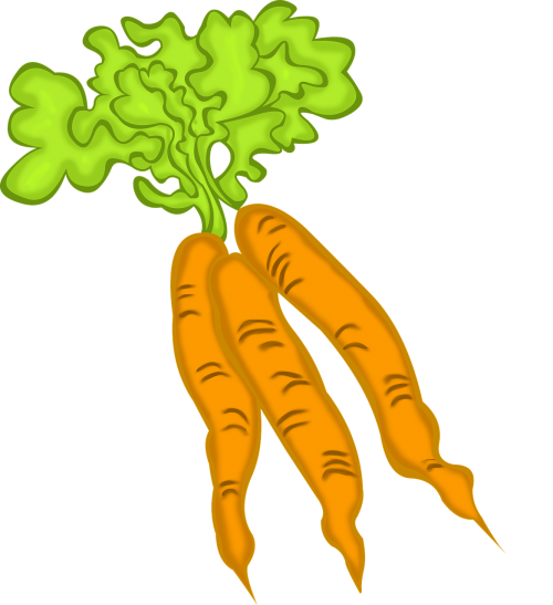 carrots vegetable vegetarian