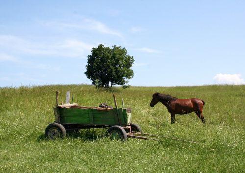 cart horse cart in the cart