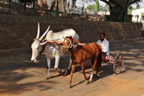 cart pony cart ox cart