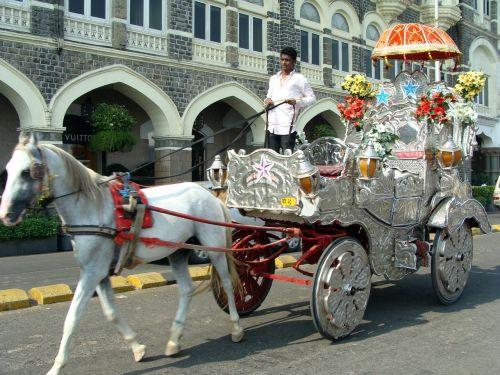 cart horse cart horse chariot
