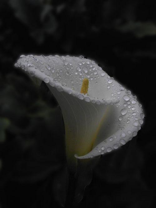 cartridge dawn rain