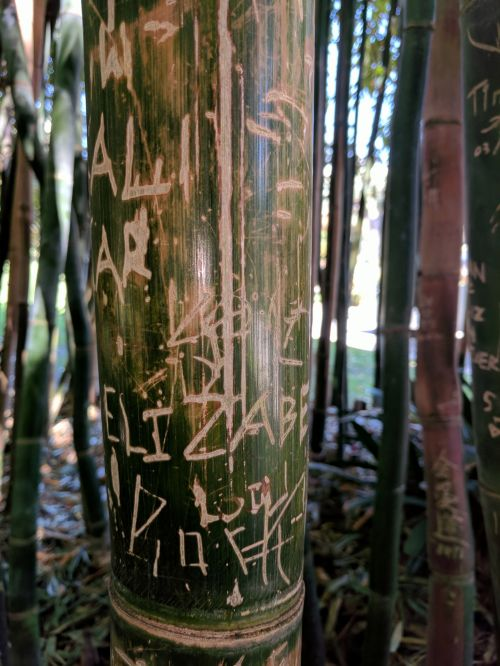 Carved Bamboo Shoots