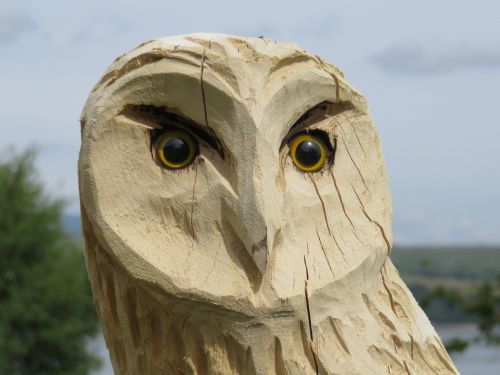 carved owl wise wood