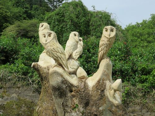 carved owls wise wood