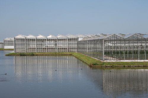 cash greenhouse horticulture horticulture