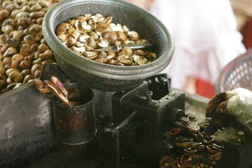 cashew nuts nits peeling