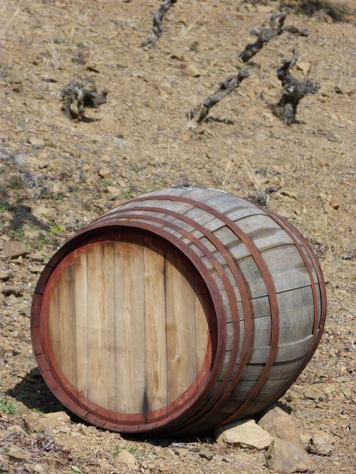 cask vineyard viticulture