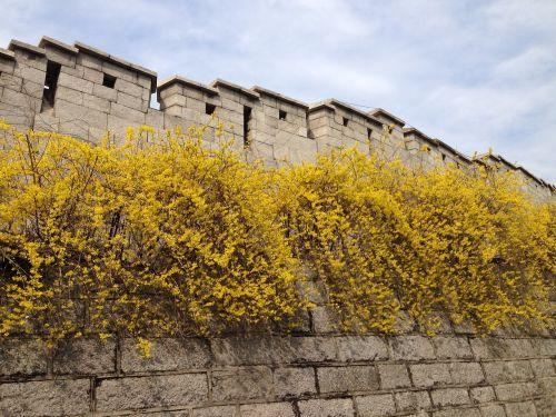 castle forsythia namsan