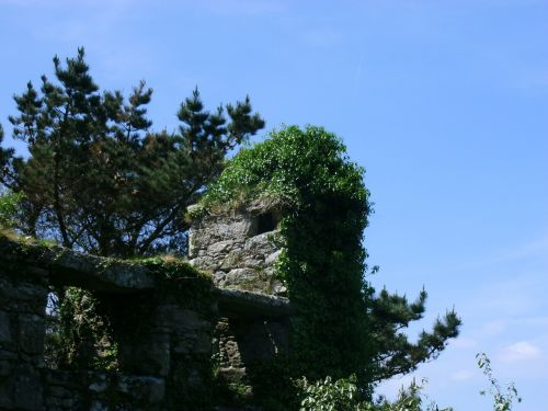 castle wall overgrown ruin