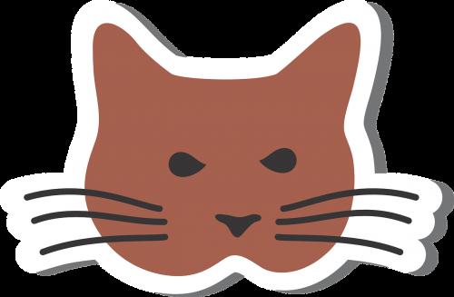 cat kat domestic cat