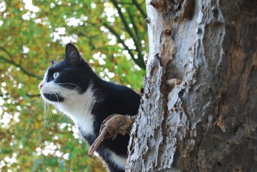cat hunting hunt
