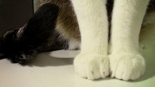 cat paws paw